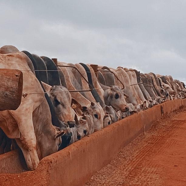 Nutrição no confinamento de gado