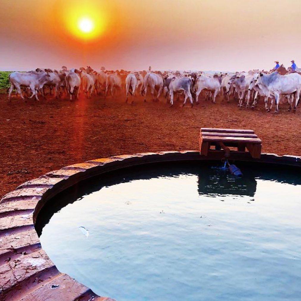 Oferecer água de qualidade garante um gado saudável